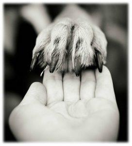 décès chien chat vétérinaire rennes cesson