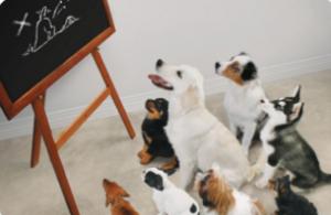 éducation chien Cesson Rennes
