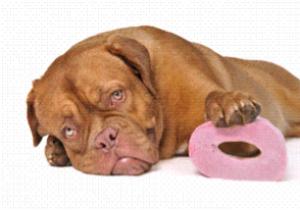 diarrhée chien vétérinaire Rennes Cesson