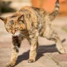 vieux chat