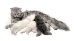 vaccination du chat et chien rennes cesson