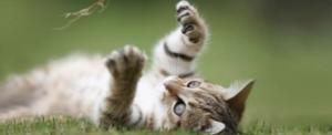 stérilisation chatte clinique vétérinaire Rennes Cesson Sévigné