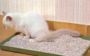 malpropreté urinaire chat vétérinaire cesson rennes
