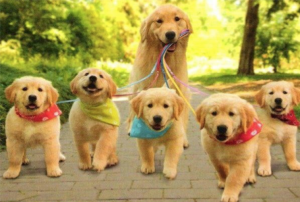 stérilisation chienne clinique vétérinaire Rennes Cesson Sévigné