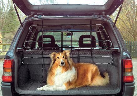 vacances chien coffre voiture