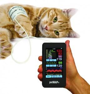 hypertension arterielle chien chat clinique vétérinaire la boulais cesson rennes