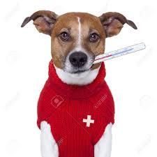 vaccination du chat rennes cesson