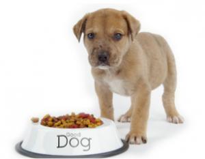 diététique chien